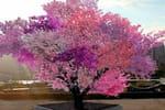 L'arbre incroyable aux 40 espèces de fruits