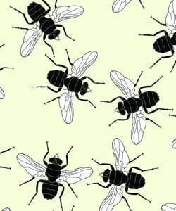 les mouches les meilleures blagues sur nos amies les b tes linternaute. Black Bedroom Furniture Sets. Home Design Ideas