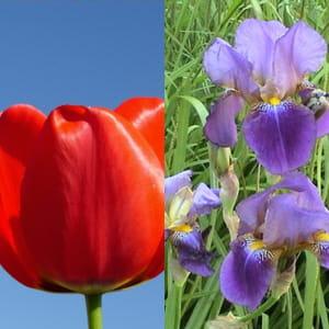 quelles fleurs offrir pour une d claration d 39 amour quelles fleurs offrir en quelles. Black Bedroom Furniture Sets. Home Design Ideas