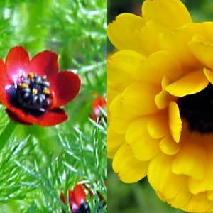 Quelles fleurs offrir pour signifier le chagrin for Fleurs offrir