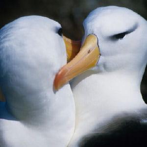 il faut se méfier de l'albatros.