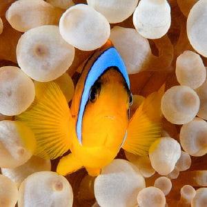 les poissons auraient de vives émotions.