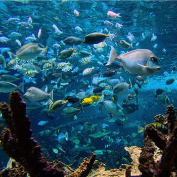 les poissons du grand aquarium abyssal captivent les visiteurs par leurs ballets