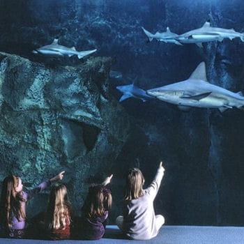 l aquarium de la rochelle les 15 plus beaux aquariums de linternaute