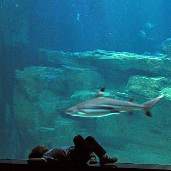 Aquarium du Grand Lyon : Les 15 plus beaux aquariums de France ...