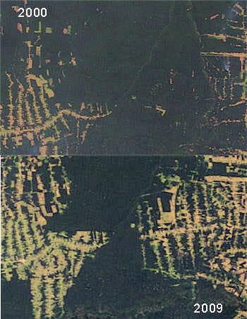 la déforestationn en amazonie s'est terriblement accentuée en l'espace de 10