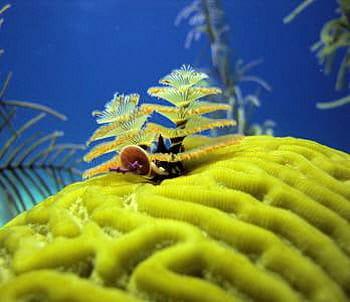 la glu produite par le ver marin remplacerait les broches actuelles pour réparer