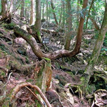 la forêt d'aokigahara jukai