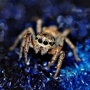 Les araign es sont dangereuses pour l 39 homme les id es re ues sur les animaux linternaute - Araignee rouge dangereux pour l homme ...