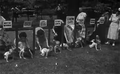 une course de bébés aux etats-unis.