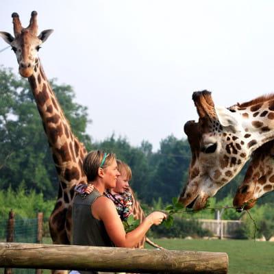le parc zoologique cerza à lisieux dans le calvados