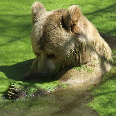 au nord de montpellier, le parc zoologique abrite près de 400 animaux.