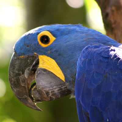 entre bourg en bresse et lyon, découvrez le parc des oiseaux, une réserve