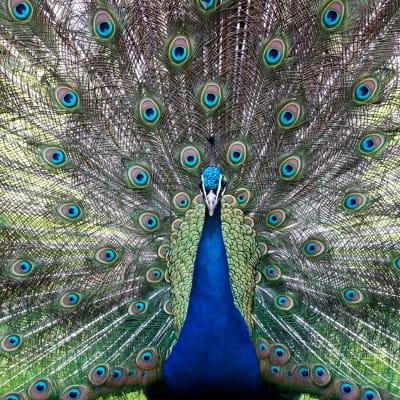 a mulhouse, le parc zoologique et botanique est l'un des plus anciens zoos de