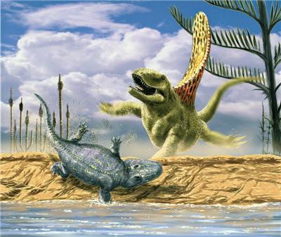 un exemple de tennoqpondyle: eryops megacephalus. il est ici aux prises avec
