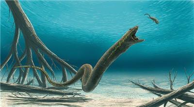 ophiderpeton est un aïstopode du carbonifère supérieur. il vivait en europe et