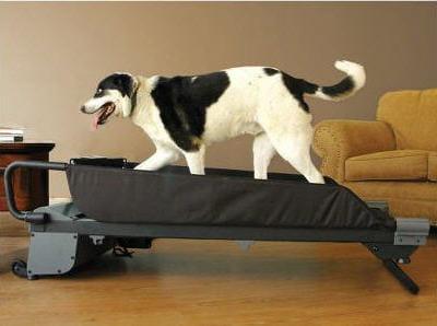 un tapis de course pour chien equipez vos animaux des derni 232 res technologies linternaute