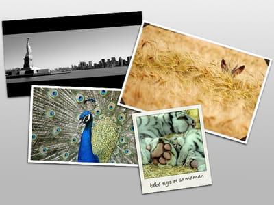 quatre exemples de cadre photo.