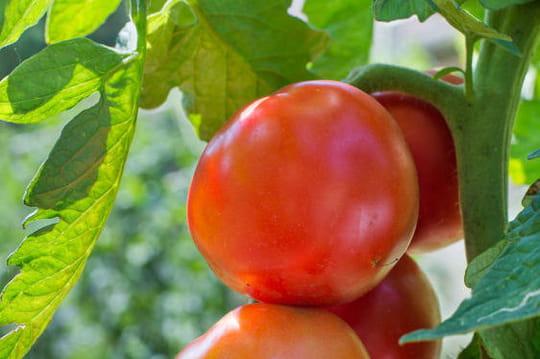 Des astuces de grand m re pour entretenir votre jardin - Linge deteint astuce grand mere ...