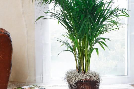 Ces plantes vertes qui d polluent votre int rieur for Plantes interieurs