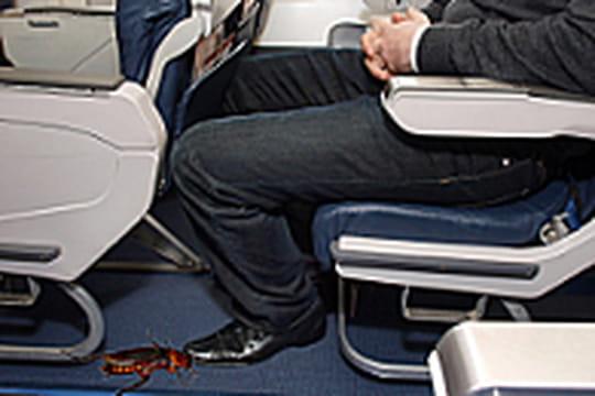 en avion les cafards valent de l 39 or linternaute. Black Bedroom Furniture Sets. Home Design Ideas