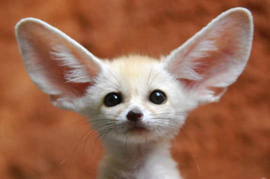 Les plus beaux b b s animaux du monde - Image bebe animaux ...