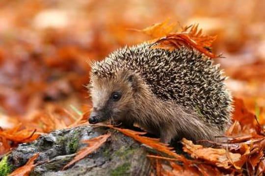 http://i-cms.linternaute.com/image_cms/540/1796035-ces-choses-qui-font-aimer-l-automne.jpg