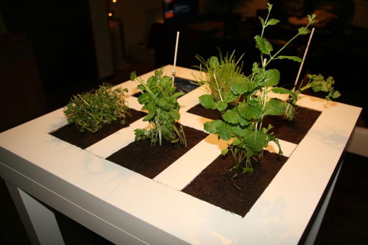 Une table basse qui fait office de potager - Ikea plante interieur ...