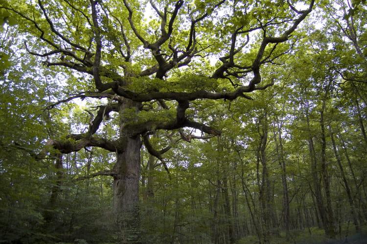 La for t de broc liande en bretagne 20 lieux en france - Le cycle arthurien et les chevaliers de la table ronde ...