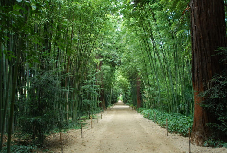 La bambouseraie d anduze ponts de mai 15 id es pour un long week end en famille linternaute - La bambouseraie a anduze ...