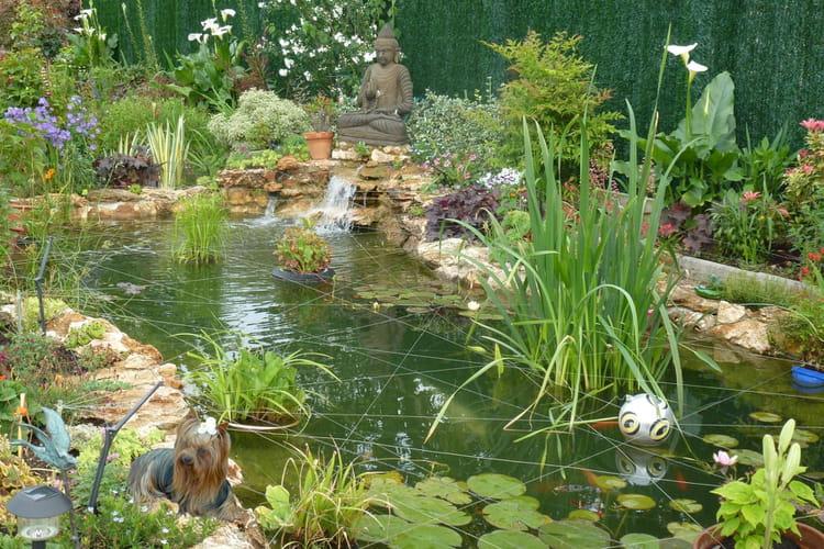 Un Jardin Avec Un Bassin Plein De Vie