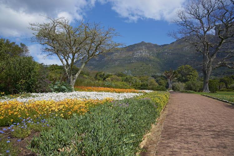 Jardin botanique de kirstenbosch en afrique for Jardin kirstenbosch