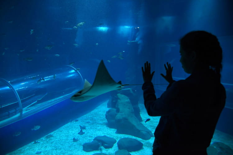 Dormir avec les poissons plongez dans l 39 aquarium de rio le plus gran - Dormir tete au sud est ...
