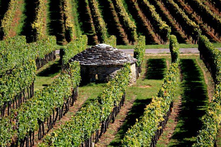 Nuits-Saint-Georges France  City new picture : En Côte d'Or, au pays de Nuits Saint Georges , les vins rivalisent de ...