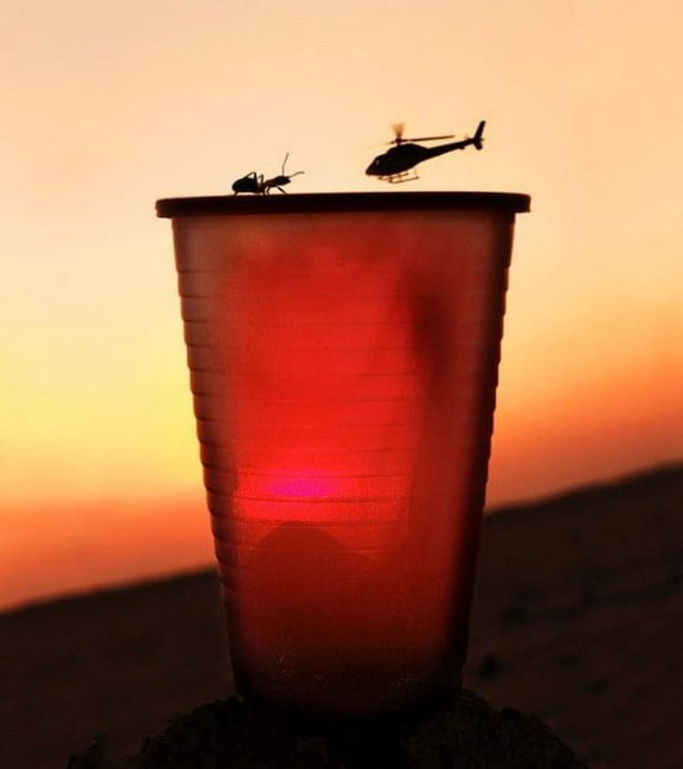 Illusion attaque de fourmi