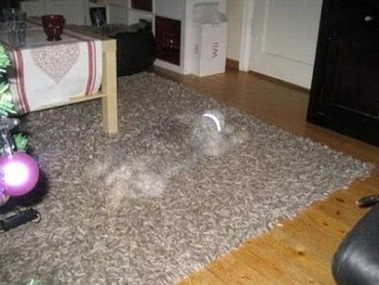 Camouflage illusion