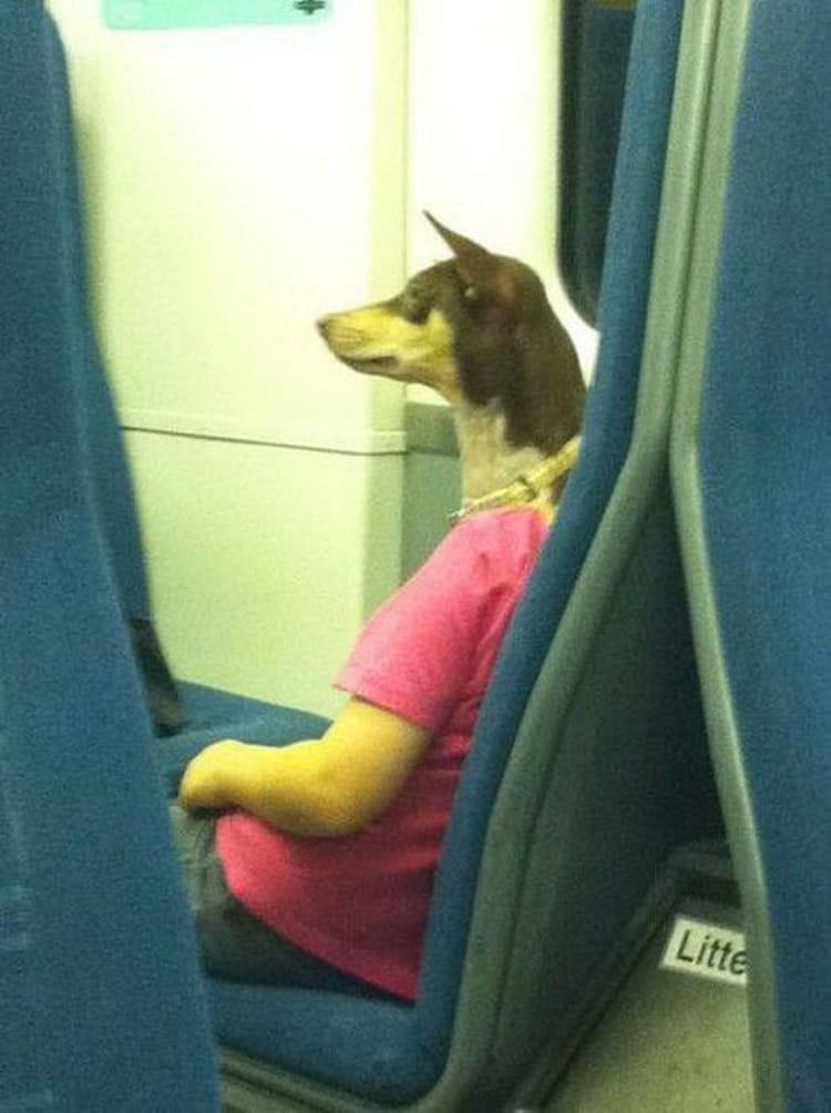 Illusion chien dans le métro