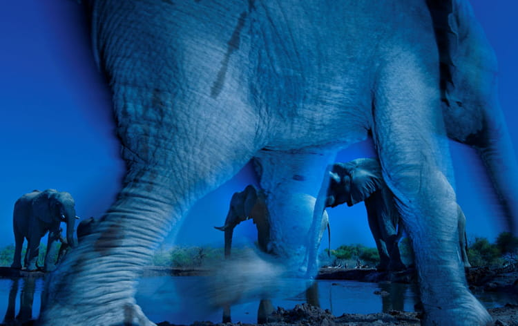 Gagnant Wildlife Photographer of the Year