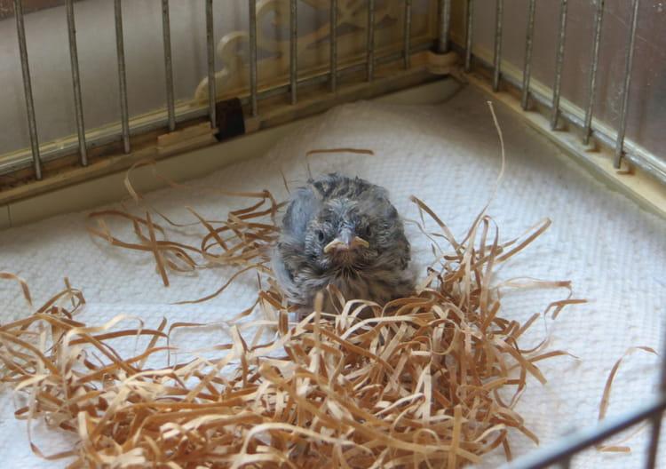 Jour 10 : nouvelle cage, nouvelle vie