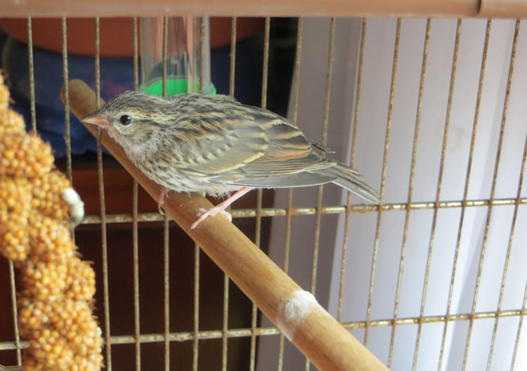 Jour 25 : l'oisillon devient oiseau