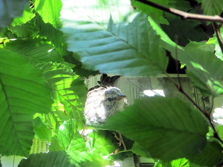Feuillages, bourgeons, Dumpling s'habitue à la nature