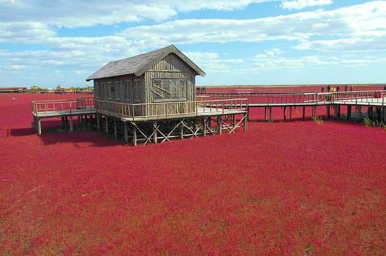 la plage rouge de panjin chine les sites naturels les plus color s sur terre linternaute. Black Bedroom Furniture Sets. Home Design Ideas