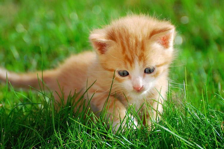 Photos sur les animaux...Les animaux les plus mignons de ...