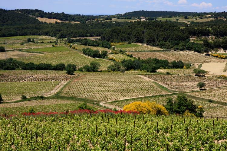 Rasteau, côté vignes