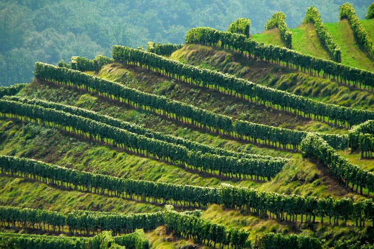 Pays basque : Vignoble d'Irouleguy