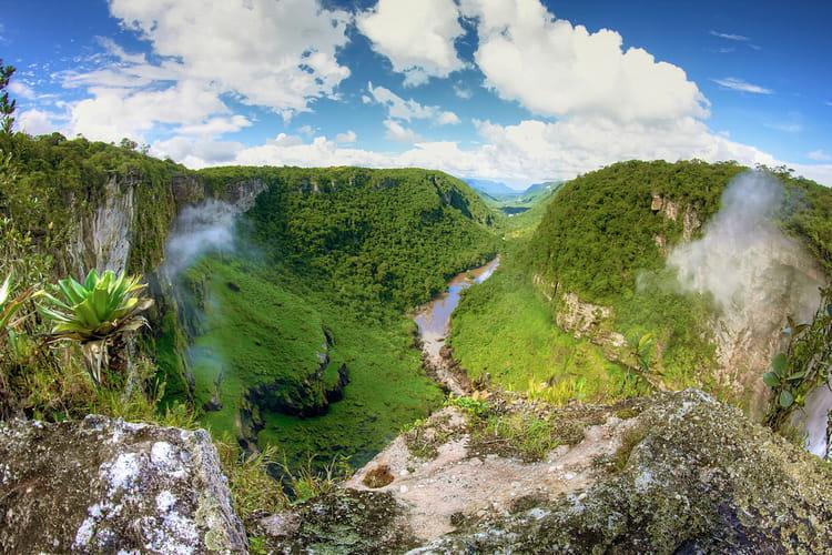 Les forêts tropicales de l'Amazonie française : Les 100 plus beaux ...