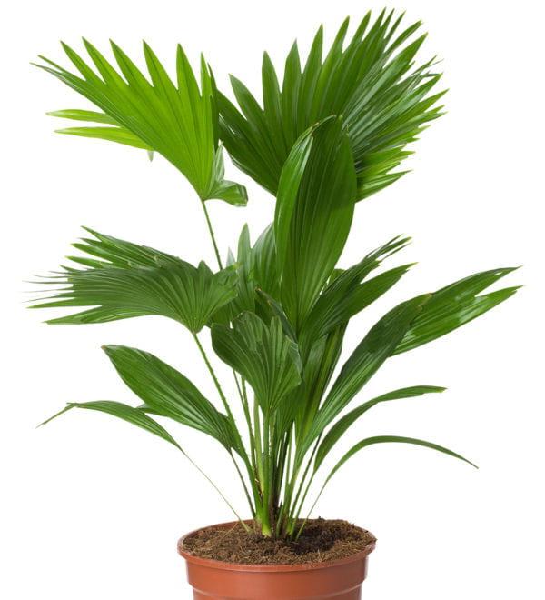 Faire briller les feuilles for Recherche sur les plantes vertes