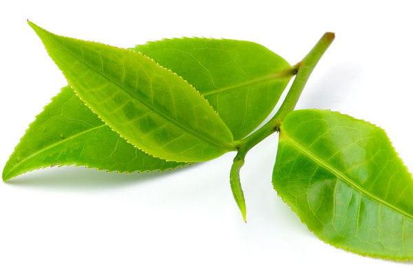 20 astuces pour des plantes vertes en pleine sant for Des plantes vertes