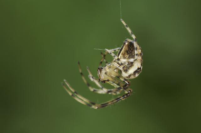 suspendue un fil 20 portraits d 39 araign es en macro linternaute. Black Bedroom Furniture Sets. Home Design Ideas