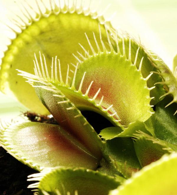 Entretenir les plantes carnivores 20 astuces pour des for Recherche sur les plantes vertes